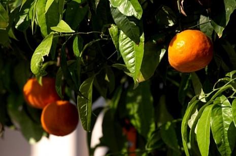 греция апельсини