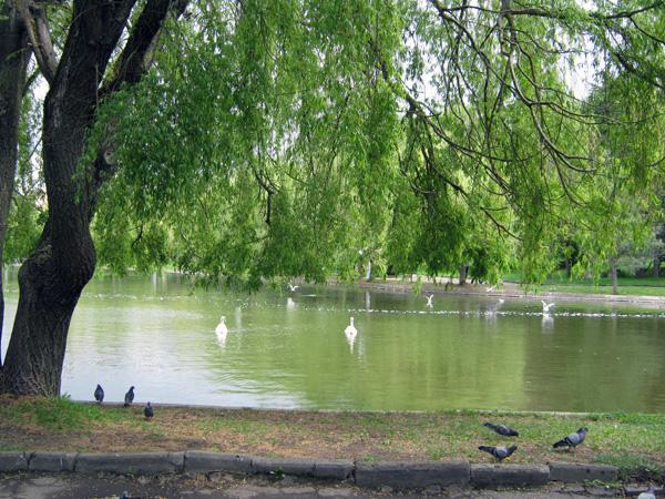 Озеро в парку Рівне