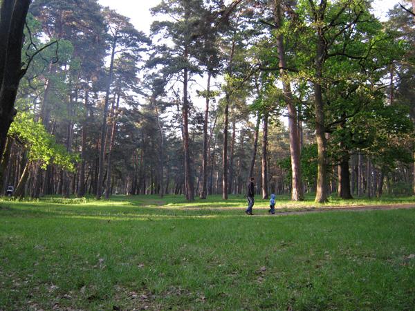 Ліс Рівне