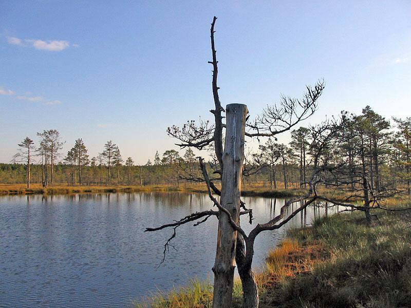 Болотні стежки Естонії.  Болото Віру Раба (Viru Raba)
