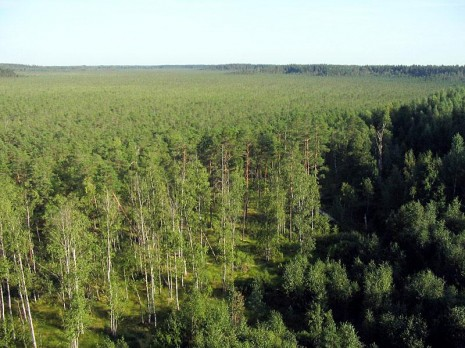 Болотними стежками Естонії. Частина 2. Болото Валґесоо (Valgesoo)