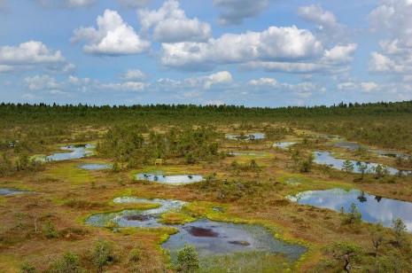 Болотні стежки Естонії. Частина 3. Болото Мяннік'ярве (M?nnikj?rve)