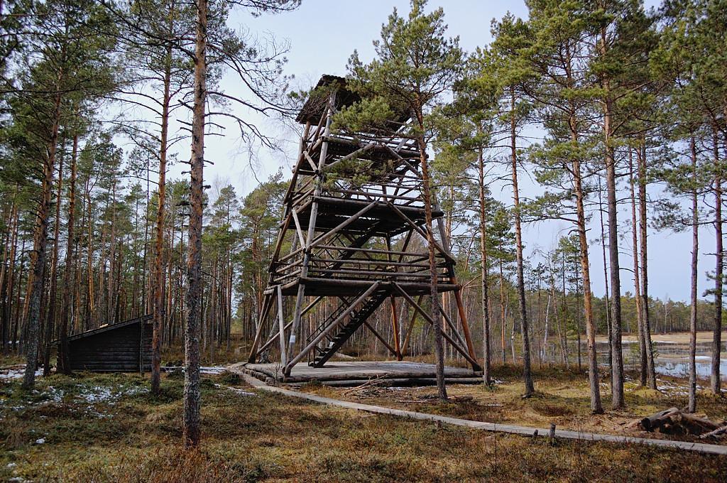 Болотні стежки Естонії. Частина 5. Болото Селісоо (Selisoo)