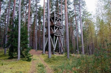 Болотні стежки Естонії. Болото Меенікунно