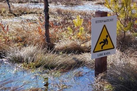 Болотні стежки Естонії.