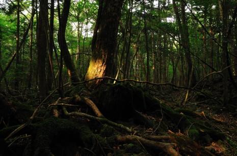 Японський ліс самогубців «Дзюкай»
